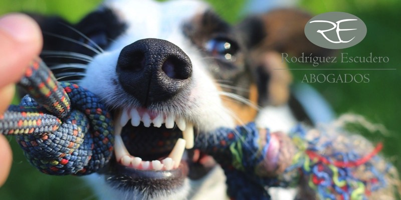 Indemnización por mordedura de perro