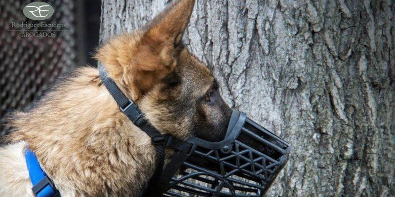 Responsabilidad civil por mordedura de perro